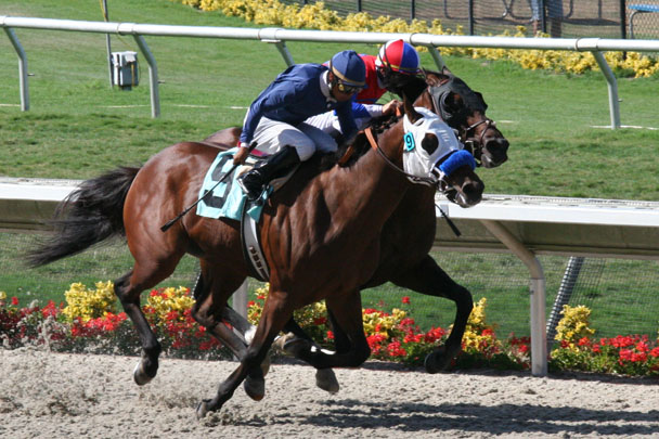 Create A List Of Horses And Get Notifications On New Works Entries Handicapping Reports